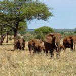 E-visa Tanzanie : quand, comment et où le faire ?