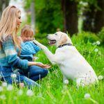 Suivez le déroulement du séjour de votre chien dans sa famille d'accueil