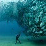 Une escapade dans la Baja California Sur