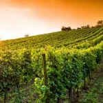 Réservez un gite en Dordogne pour des vacances estivales exceptionnelles