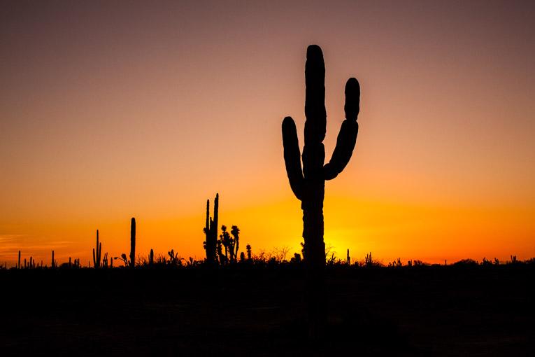 Une escapade dans la baja california sur - Voir tous les cactus ...