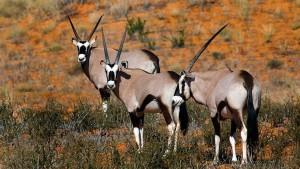 6 sites naturels incontournables en Afrique du Sud