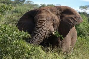 La Cote d'Elephant